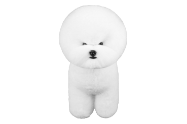 Trainingsfell Bichon